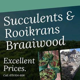 Succulents & Rooikrans